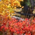 Fall colors along the Five Lakes Trail.- Five Lakes Trail