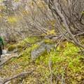 Thick Sitka alder (Alnus viridis) on Colchuck Lake's southern shore.- Enchantment Lakes Hike via Colchuck Lake