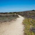 Walking trails around Pigeon Point Lighthouse.- Pigeon Point Lighthouse + Hostel