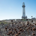 Pigeon Point Lighthouse from the walking trail.- Pigeon Point Lighthouse + Hostel
