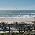 Picnic and dune restoration zone.- Scott Creek Beach