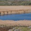 Estuary at Scott Creek.- Scott Creek Beach