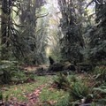 Ferns and moss on the Moments in Time Trail.- Moments in Time Interpretive Trail