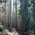 Blue Lake Trail in alpine forest.- Blue Lake Hike