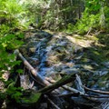 Base of the waterfall.- Teneriffe Falls