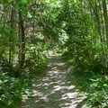 Alders line the trail to Teneriffe Falls.- Teneriffe Falls