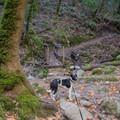 Waterfall Loop is a dog-friendly hike.- Waterfall Loop