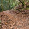 Contour Trail.- Knobcone Point + Black Rock Falls Hike via Contour Trail