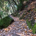 Following the contour of the canyon- Knobcone Point + Black Rock Falls Hike via Contour Trail