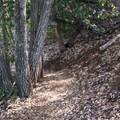 Contour Falls Trail.- Knobcone Point + Black Rock Falls Hike via Contour Trail
