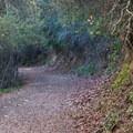 Shady path along the Alec Canyon Trail.- Alec Canyon + Triple Falls Trail