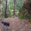 Alec Canyon and Triple Falls trails are both dog friendly.- Alec Canyon + Triple Falls Trail