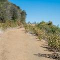 Trail from Manzanita Point.- Alec Canyon + Triple Falls Trail