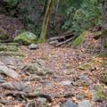 Scenery along the Waterfall Loop.- Waterfall Loop