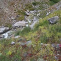 Queens River cascades over several steep bedrock sections of the creek and is flanked by thick shrubbery that adds pretty color to the landscape with the change of the season.- Queens River Trailhead to Queens River Falls + Nanny Creek