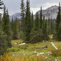 The trail crosses several open meadows en route to the Every Divide above the junction to the Queens River Divide.- Queens River, Lake 8,696 + Queens River Divide
