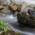 Blurred water and flowers along the creek.- Queens River, Lake 8,696 + Queens River Divide