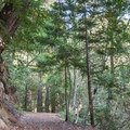 Shaded hike toward the Old Logging Camp area.- Alec Canyon + Triple Falls Trail