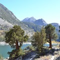 Western junipers along the trail.- Lake Sabrina Inlet Hiking Trail
