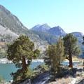 Western junipers along the trail.- Lake Sabrina Loop Hike