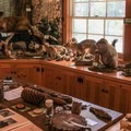 Exhibits and information on local flora and fauna and natural history are available at the park's visitor center.- D.L. Bliss State Park