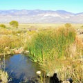 Spring 4.- Keough's Hot Springs Ditch