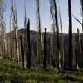 Rabbit Creek Fire scars.- Picket Mountain Trail