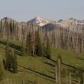 Green grass in July stands in stark contrast to the Rabbit Creek Fire scars.- Picket Mountain Trail