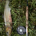 Cutthroat trout caught in Pats Lake.- Pats Lake, Arrowhead Lake, + Queens River Divide