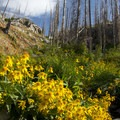 The trial from Johnson Lake to Pats Lake was badly burned in the Rabbit Creek fire in 1994. It is now a beautiful riot of colorful shrubs, flowers, and young evergreen trees.- Pats Lake, Arrowhead Lake, + Queens River Divide
