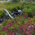 Colorful shrubs start to change color in September.- Pats Lake, Arrowhead Lake, + Queens River Divide