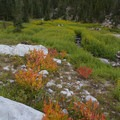 Stunning wildflower meadows flank Scenic Creek on the hike up to the lake.- Little Queens River + Scenic Lake