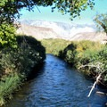 Owens River.- Pleasant Valley Campground