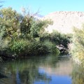 Calm section on the Owens River.- Pleasant Valley Campground