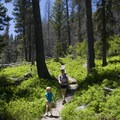 Lush green in June greets hikers in Redfish Lake Creek Canyon.- Redfish Inlet Hikes