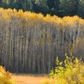 Fall color in the aspens near Spooner Lake.- Spooner Lake Loop Hike