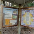 Information about the pine bark beetle and the prepoderance of dead trees in the area. - Spooner Lake Loop Hike