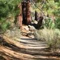 Spooner Lake Loop.- Spooner Lake Loop Hike