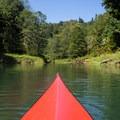 Exploring the Bear Creek inlet.- Lake Shannon Sea Kayaking