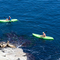 Kayakers get up close with seals.- La Jolla Cove