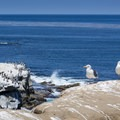 These seabirds have a great view.- La Jolla Cove