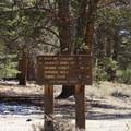 Jeffrey pine forest.- Jeffrey Pine Forest