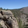 Clark Canyon.- Jeffrey Pine Forest