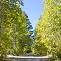 Aspen trees at Gull Lake Campground.- Gull Lake Campground