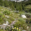 The wildflowers along the old Eureka Gulch road are stunning in August.- Eureka Gulch