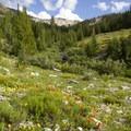 More late summer wildflowers.- Eureka Gulch