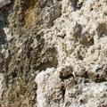 Calcium carbonate built up around underwater springs to form the tufa of Mono Lake.- South Tufa to Navy Beach