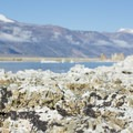 Alkali flies are an important part of the food chain at Mono Lake. - South Tufa to Navy Beach