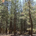Upper Deadman Campground.- Upper Deadman Campground