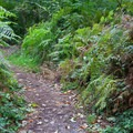 Trail to campsite.- Wallace Falls Campground